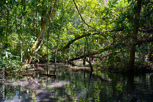Deurstickers Groene travel mangrove forest by rowboat
