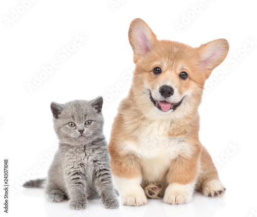 Happy corgi puppy with open mouth and tiny kitten together. isolated on white background © Ermolaev Alexandr