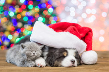 Australian Shepherd Puppy  In Red Santa Hat And Baby Kitten Sleep Together With Christmas Tree On Background