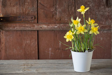 Narcissus In Pot On Wooden Bac...