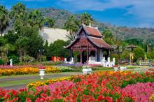 Flower Garden Royal Park Ratchaphruek Chiang Mai Thailand