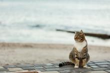 Funny Grey Cat On The Beach Ag...