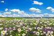 Leinwandbild Motiv spring landscape with flowering flowers on meadow