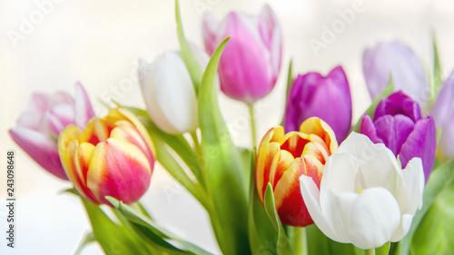 Foto op Plexiglas Struisvogel Frühlingsbeginn-Tulpenstrauss im Sonnenlicht, leuchtende Farben-Hintergrund
