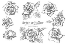 Set Of Hand Drawn Sketch Roses...
