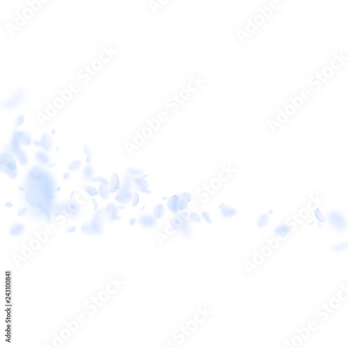 Fototapety, obrazy: Light blue flower petals falling down. Beautiful r