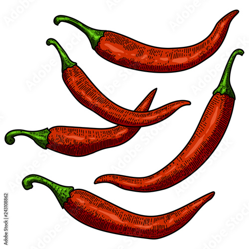 Set of chili pepper illustrations on white background Canvas