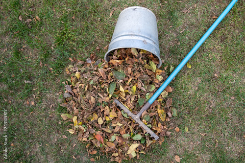 Fotografie, Obraz  a heap of leaves swept together with a rake on a meadow in the garden