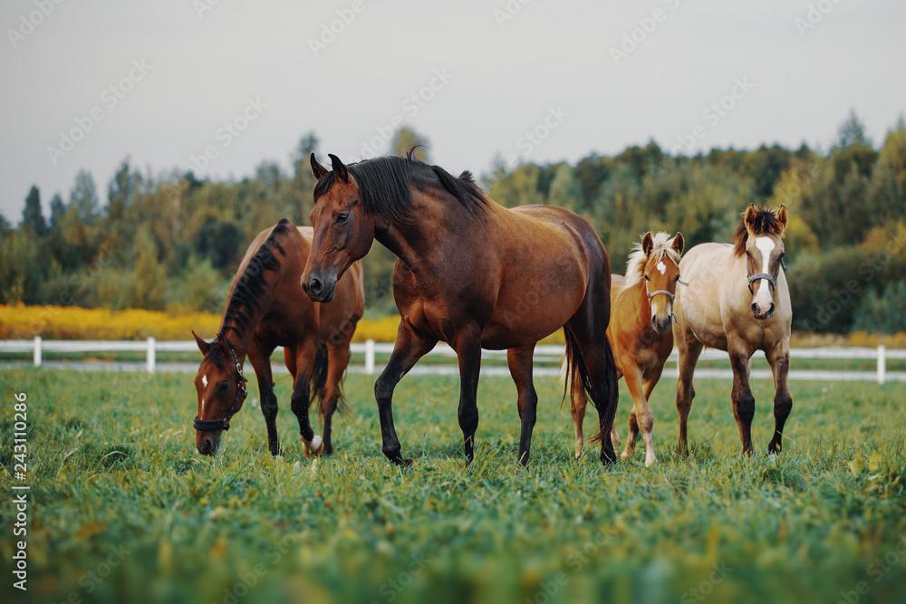Horses in the herd