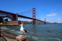 Seagull And Golden Gate Bridge, San Francisco
