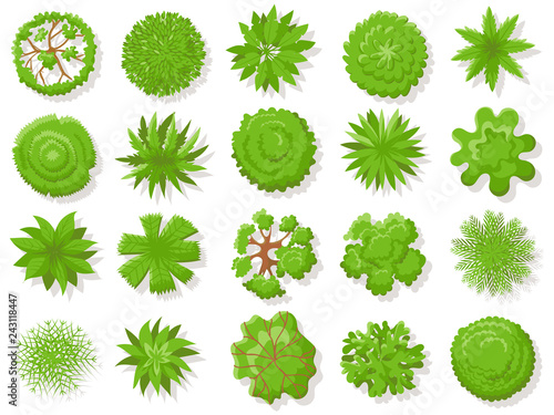 Poster Blanc Top view plants. Tropical trees, green plant tree from above for aerial map isolated vector collection