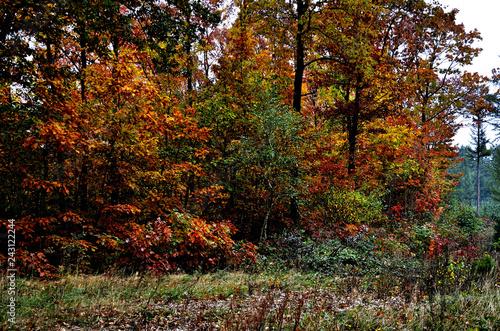 Fotografie, Obraz  Herbst