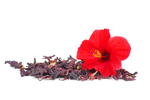 Hibiscus Flower And Dry Blossom