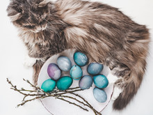Easter Eggs Painted With Bright Colors And A Charming Kitten On A White Background. Top View, Close-up, Isolated. Happy Easter. Preparation For The Holiday