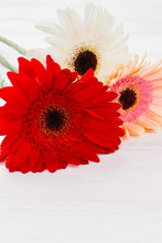 Multicolored Gerber Daisy Flowers, Close Up. Red, White And Pink. White Wooden Table Background.