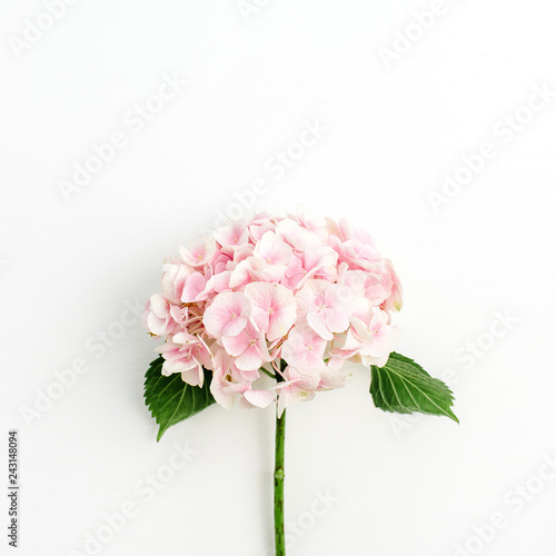 Cadres-photo bureau Hortensia Pink hydrangea flower isolated on white background. Flat lay, top view.