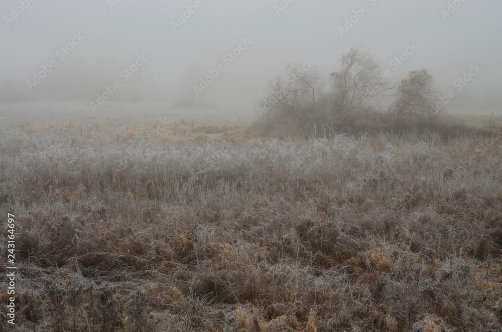 Fototapeta Brązowa łąka