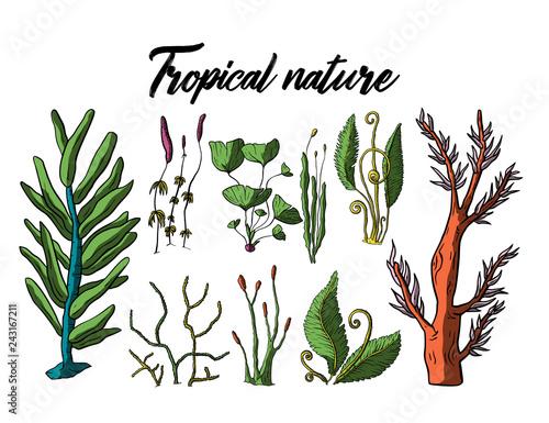 Obraz na plátně Prehistoric vector plants.