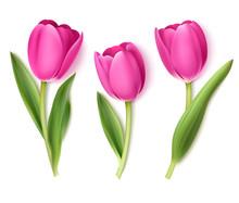Set Of Decorative Flowers Isol...