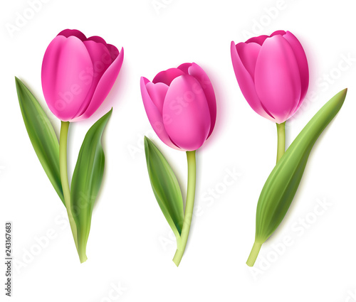 Set of decorative flowers isolated on white background. Vector pink tulip for spring holidays decor.  #243167683