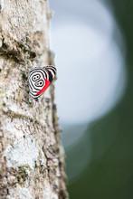 Butterfly 88 At Iguazu Falls In South America
