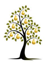 Golden Pear Tree