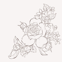Vector Rose With Wild Flower. ...