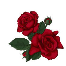 Beautiful Red Rose Isolated On White. Perfect For Background With Flowers.