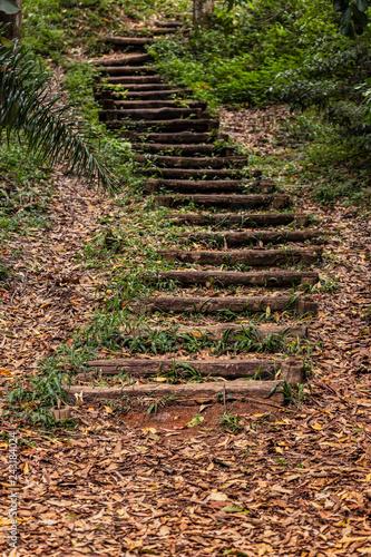 Fotografie, Obraz  Escada em meio a trilha na natureza, trilha, floresta.