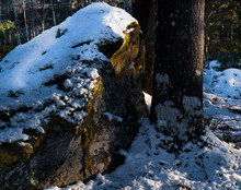 Big Stone In Forest, Stor Snötäckt Sten I Skogen