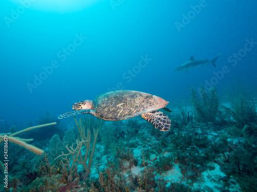 In de dag Koraalriffen Schildkröte
