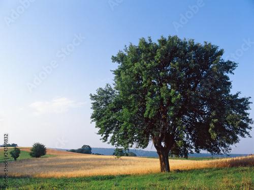 Fotografiet  Wigry National Park, Poland