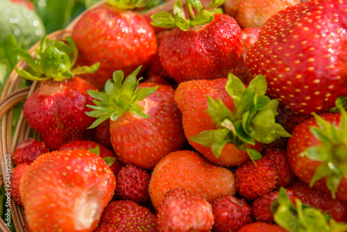 Fotografie, Obraz  Ripe, juicy and red, strawberries in a plate close-up, in full frame
