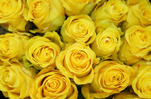 Fresh Yellow Roses Bouquet Flo...