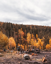A Logging Camp With Multiple Bulldozers And Other Heavy Machinery, With An Autumn Forest Behind; Several Tractors During Maintenance In A Logging Camp In A Fall Wood With A Mud Ground In A Foreground