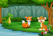 Wild Animal Are Enjoying Nature By The River