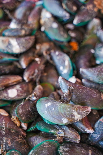 fresh mussel from seafood store