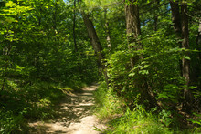 Dirt Path Through The Woods On A Midwest Summer's Afternoon.  Starved Rock State Park, Illinois, U.S.A..