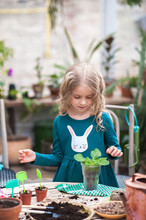 A Child Girl In A Green Dress Transplants Potted Flowers In The Winter Garden. Girl In Gardening Help Transplant Indoor Flowers