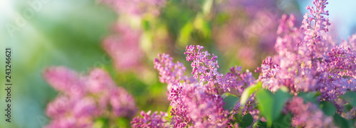 Recess Fitting Lilac Lilac flowers blooming outdoors