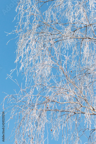 snowflakes on birch branches against the blue sky