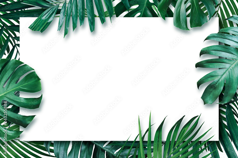 Fototapety, obrazy: Summer tropical leaves with blank paper on white background