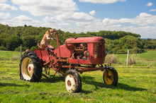 Dog On Vintage Red Tractor In ...