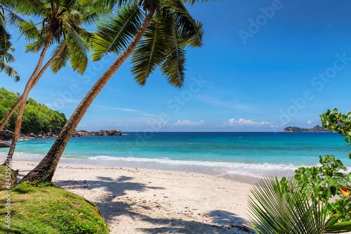 Naklejka premium Palmy i tropikalna plaża z białym piaskiem. Wakacje tło wakacje koncepcja wakacje. Karaibska rajska plaża.
