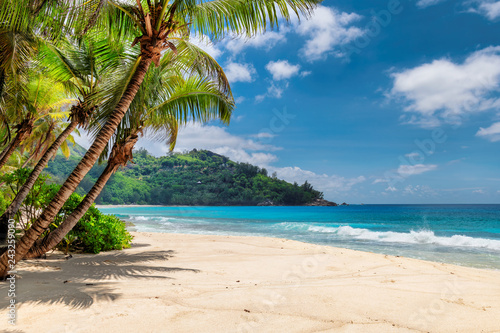 Beautiful beach with palms and turquoise sea in Jamaica island.