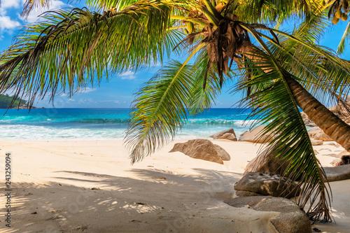 Obraz premium Tropikalna plaża z palmami i turkusowym morzem na wyspie Seszele.