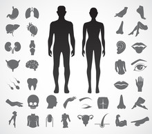 Body Parts Vector Icon Set.