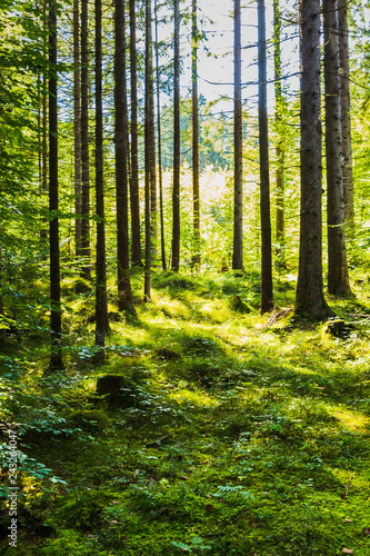 Photo Stands Road in forest View of trees from inside a forest