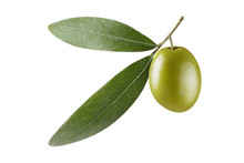 Single Green Olive With Leaves, Isolated On White Background