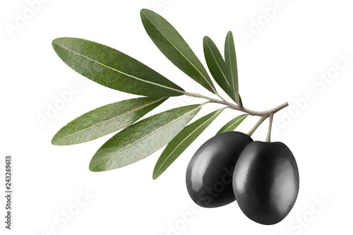 Foto op Plexiglas Olijfboom Olive branch with two black olives, isolated on white background